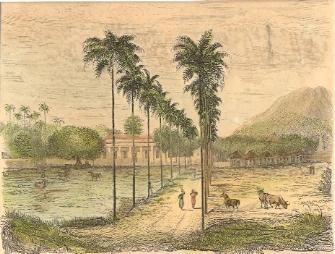 JAVA, RÉSIDENCE À BANIOU-WANGUI, Indonésia, old print, asia, eng